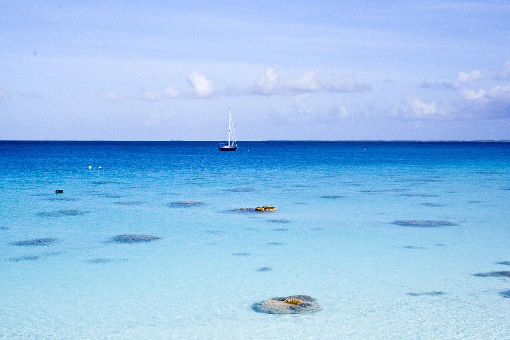 Shark Attacks In Cayman Islands
