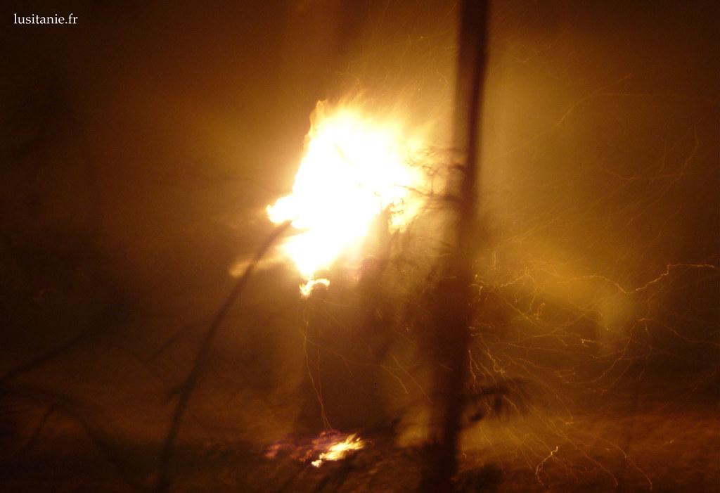 explosion de flammes dans un arbre, de nuit