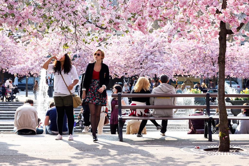 Kungsträdgården in spring.
