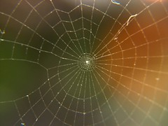 Spiral Spiderless Web | by Sudhamshu