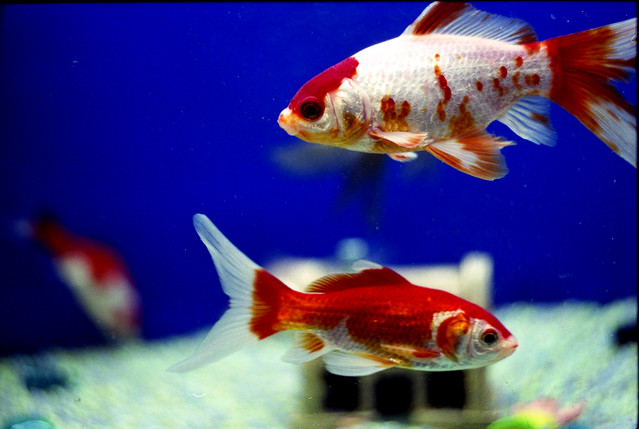 Pet shop fish flickr photo sharing for Fish pet shop