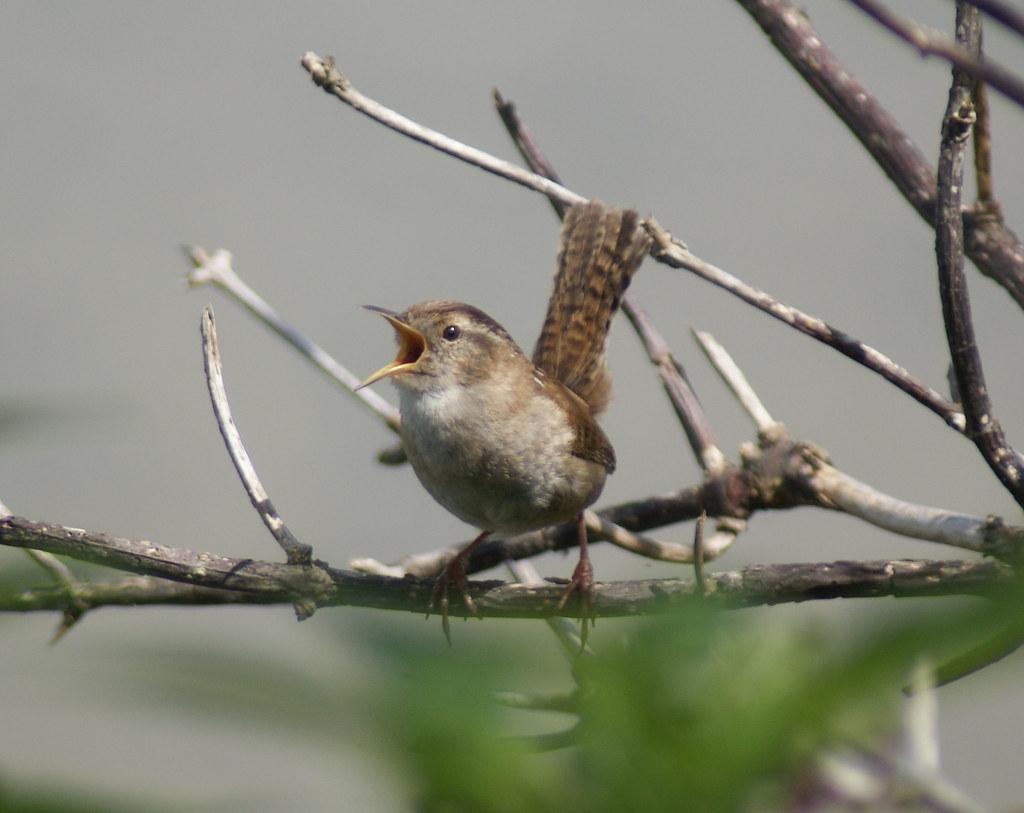 πραγματικό πουλί φωτογραφίες
