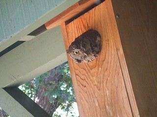 screech nest box1 | by Contra Costa Times