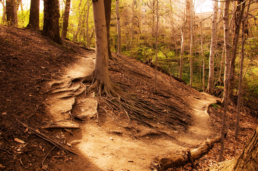 Two Roads Diverged In A Wood And I Kat Flickr