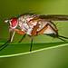 Fliege im Profil