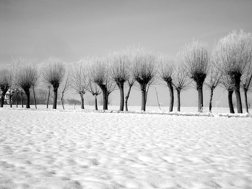 landscape with trees. | by candido baldacchino