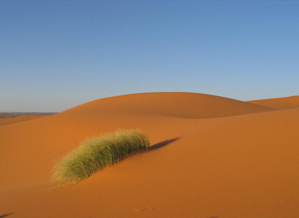 Desert grass | Erg Che...