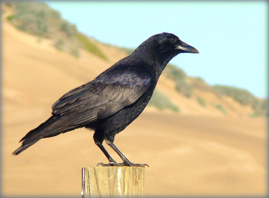 Image Result For Bird Pictures To