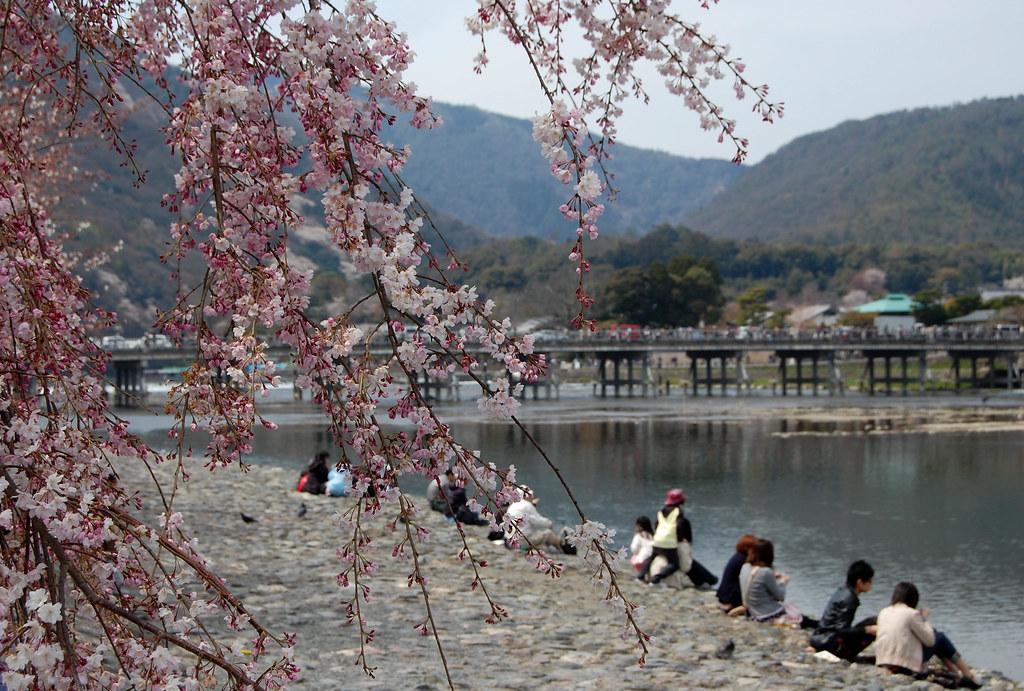 Kinh nghiệm du lịch Nhật Bản tự túc | mùa hoa nhật bản