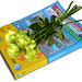Yellow Pages & Yellow Roses