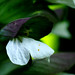 Flor blanca y morada