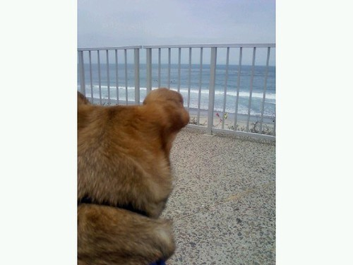 Tex's view of beach | by too many jennifers