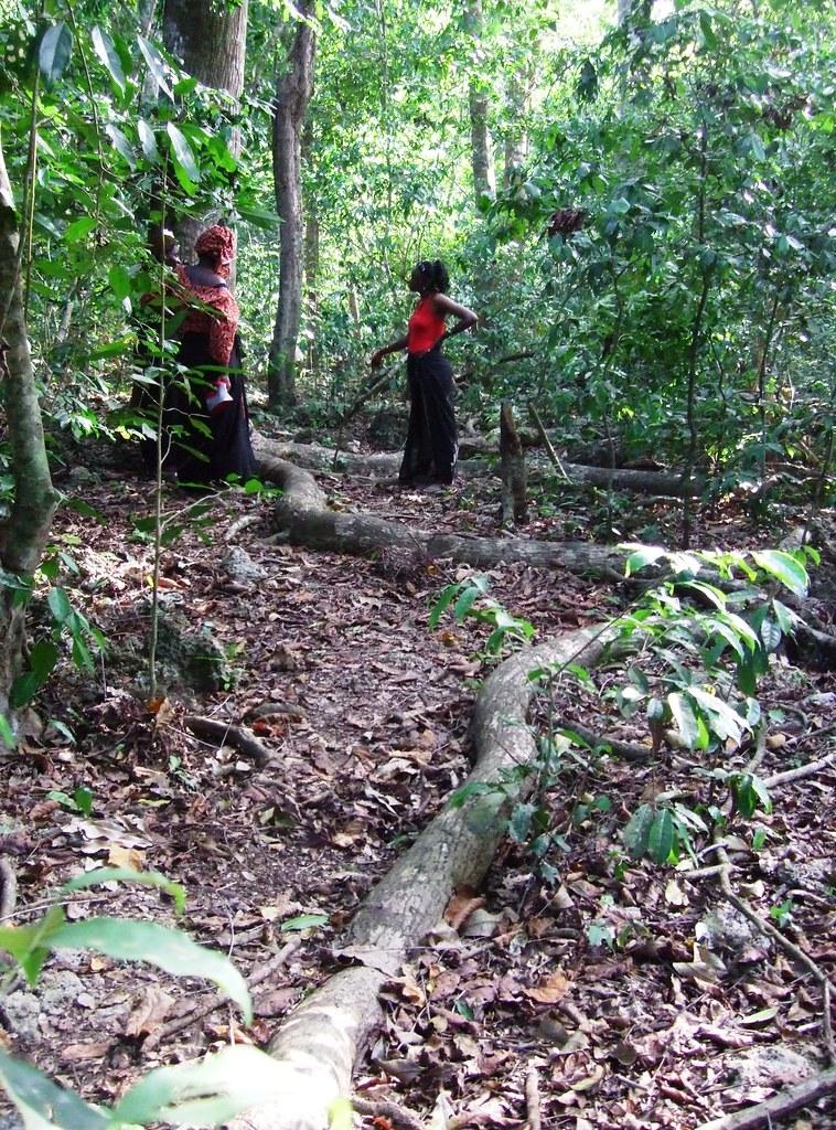 Mijikenda Kaya Forest