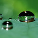 Big Brother Drop Is Watching: Paranoia Amongst Rainforest Droplets