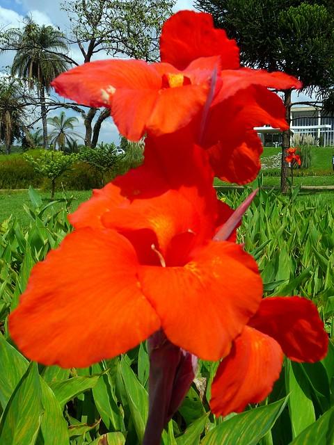 Flores jardim do museu de arte da pampulha flor no for Catalogo de flores de jardin