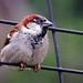 Free range bird