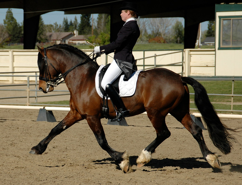 North Forks Cardi Extended Trot RM Dressage 5 Apr 09 3 48