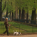 pair of dogs on a leash - Paris