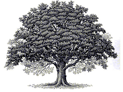 oaktree clip art oakdalebaptist flickr
