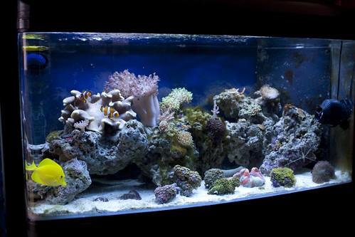 Tropical marine fish tank Flickr - Photo Sharing!