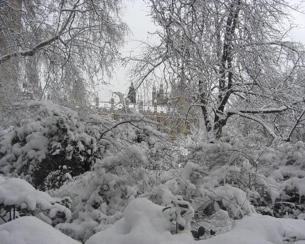 Habitat of the Urban Snow Leopard