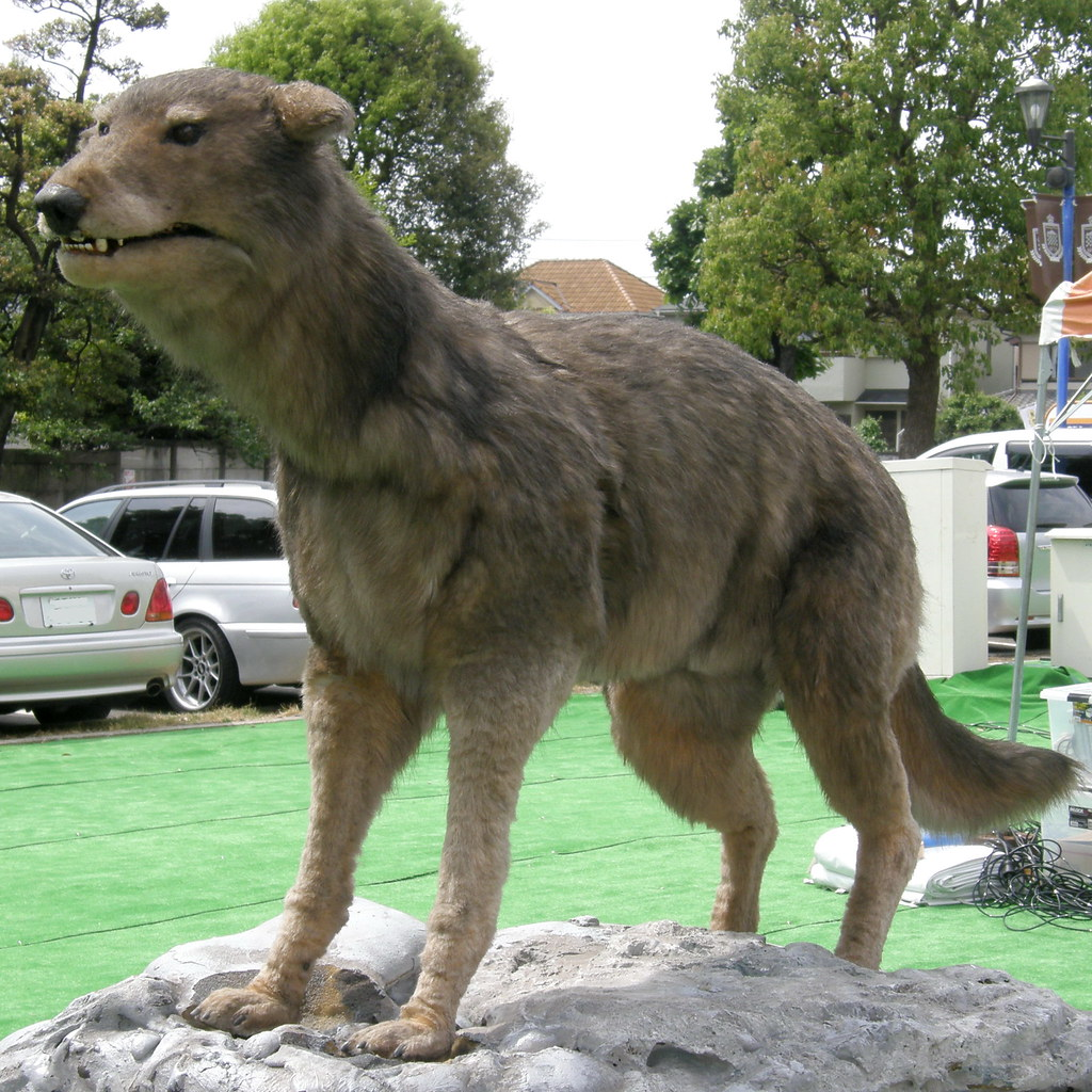 Image Result For Shepherd And Wolf