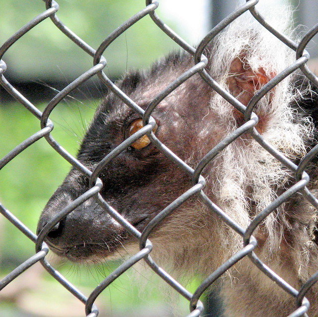 Duke Lemur Center Private Tour