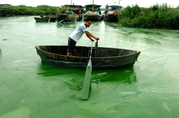 中國合肥巢湖充斥著藍藻。圖片來源:michael peng(CC BY 2.0)