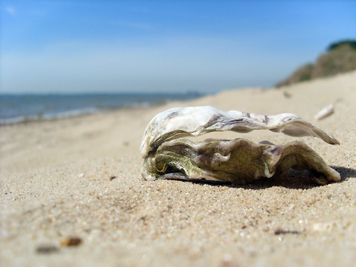 Oyster shell | by Abi Skipp
