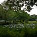 Bridge And Iris Garden In Kiyosumi Gardens