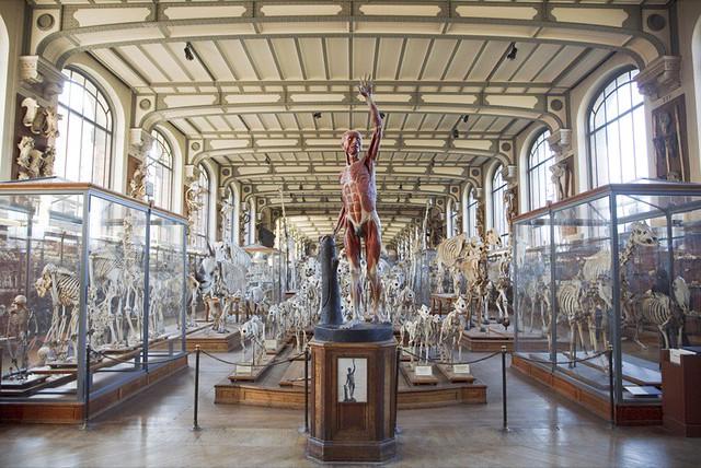 Anatomie Museum Berlin