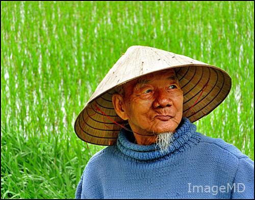 Rice Farmer Elderly Rice Farmer Vietnam Imagemd Flickr