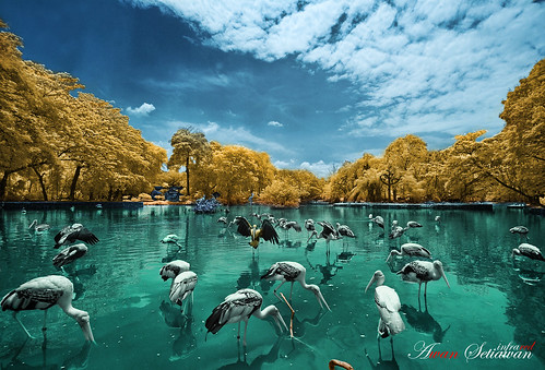 Another Malaysia National Zoo [IR] | by lyanglarhaltz a.k.a Awan Setiawan