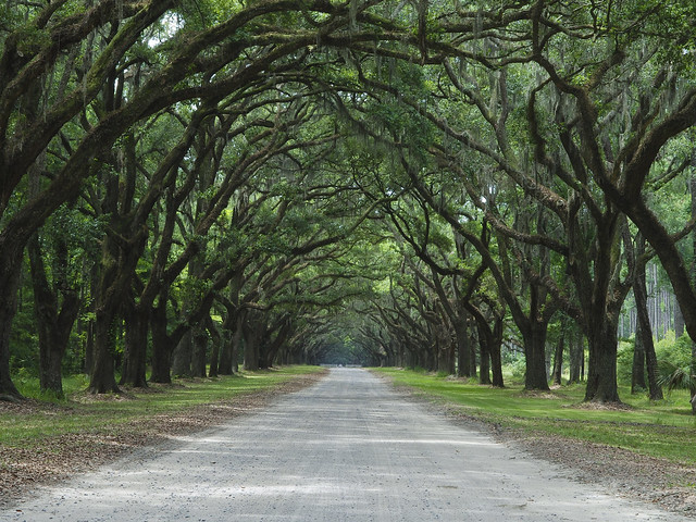 WINNER: Wormsloe Historic Site | Flickr - Photo Sharing!: https://www.flickr.com/photos/gashpo/4574818676