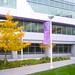 Yahoo Campus Trees - 1