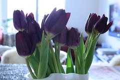Purple Tulips | by pud pud