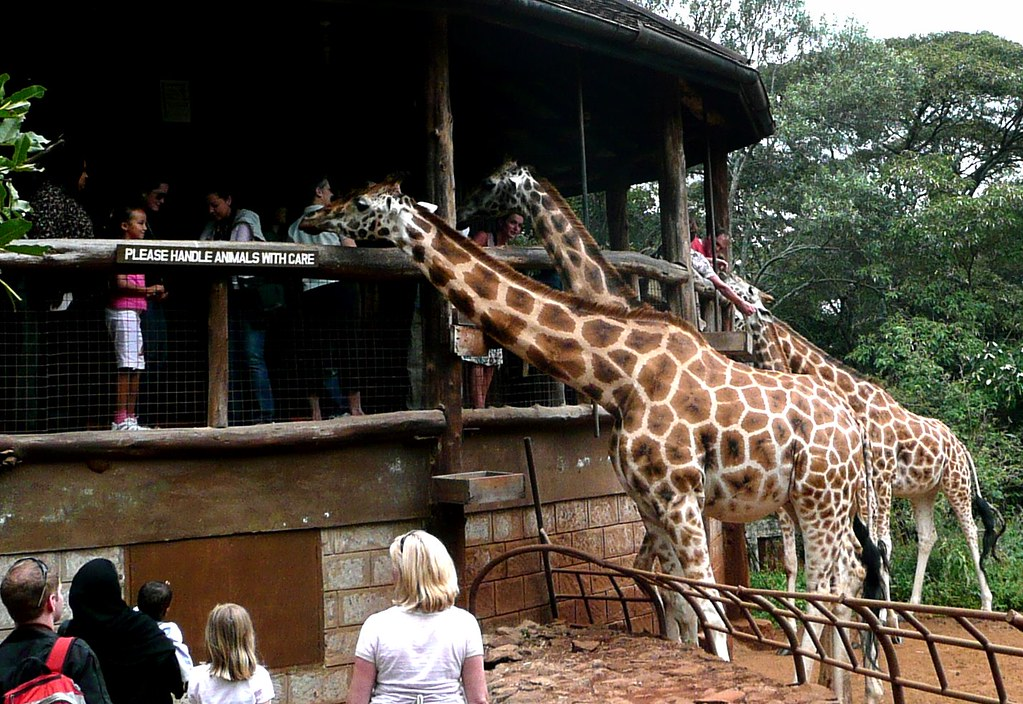 About >> Giraffe Manor, Nairobi | Giraffe Park, Nairobi | Flickr