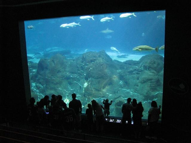 The Camden Adventure Aquarium Flickr Photo Sharing