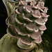 pinecone hat: back
