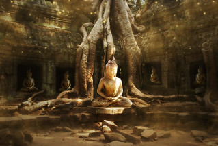 * The Buddha Tree * | by pareeerica