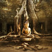 * The Buddha Tree *