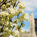 Spring in Columbus, Ohio