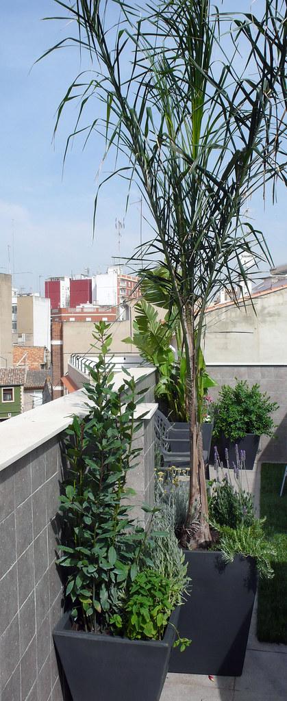 Plantas en terrazas conjunto de maceteros de resina para - Maceteros de resina ...