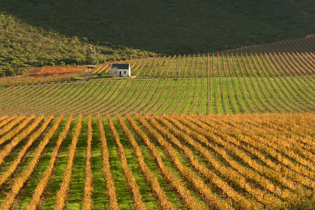 ... Wine Farm Landscape 2 | By Hassner