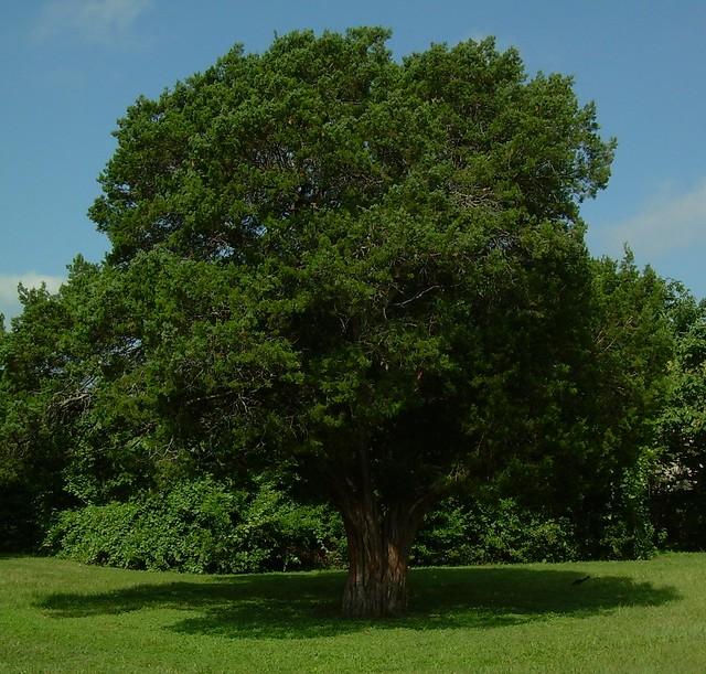 Mountain cedar a large majestic mountain cedar in the for Majestic homes bryan tx