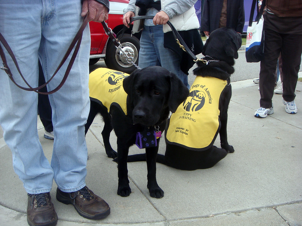 Guide Dogs Of America Puppy Training