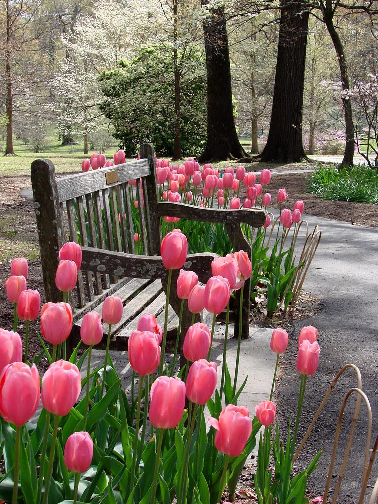 Garden reverie flickring in memphis photowalk memphis for Garden trees memphis