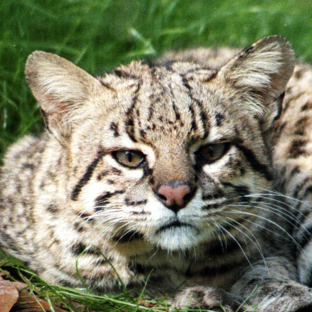 Big Cat Rescue Dmca Complaint