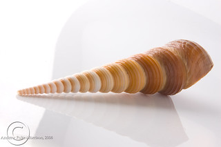 Spiral Shell | by Fomo