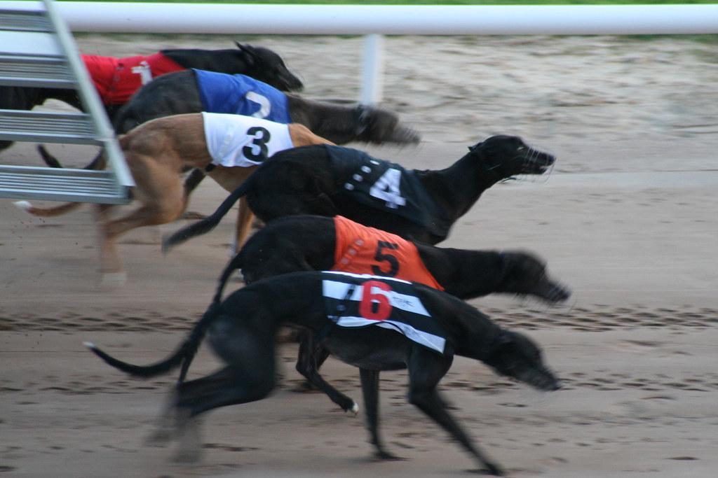 Dog Racing Shelbourne Park